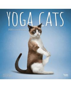 Jaarkalender 2020 Yoga Cats -9781975412258